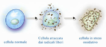 olife è l'integratore alimentare originale della evergreen ricco di polifenoli, oleuropeina e idrossitirosolo